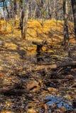 Parque de naturaleza de Martin en la caída Imagen de archivo