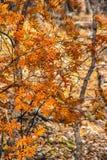 Parque de naturaleza de Martin en la caída Fotos de archivo