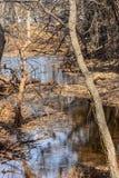 Parque de naturaleza de Martin en la caída Foto de archivo