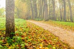 Parque de niebla en el otoño con las hojas caidas - paisaje coloreado de niebla del otoño Foto de archivo libre de regalías