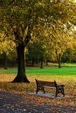 Parque de oro del otoño Fotos de archivo libres de regalías