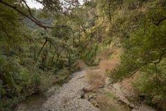 Parque de Orongorongo, Wainuiomata, Nova Zelândia Imagens de Stock