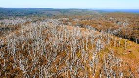 Parque de Otway Nationa del cabo, Australia Silueta del hombre de negocios Cowering Fotografía de archivo libre de regalías