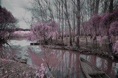 Parque de Pateira de Fermentelos Foto de Stock Royalty Free
