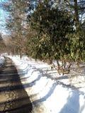 Parque de Pemberwick Foto de Stock Royalty Free