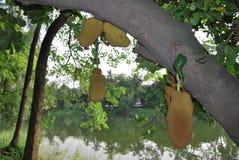 Parque de Ramna en el corazón de Dacca Fotografía de archivo