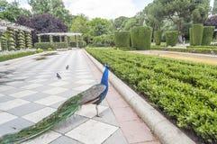 Parque de Retiro em Madrid Imagem de Stock
