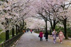 Parque de Sakura en el tiempo de primavera de Japón imagenes de archivo