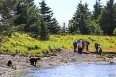 Parque de Salmon Creek Lake Clark National de la plata de la visión del oso de Alaska Brown Imagen de archivo
