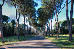 Parque de San Rossore, uma estrada em Toscânia Imagem de Stock