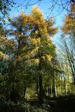 Parque de Tattingstone, Reino Unido, cores das folhas de outono Fotografia de Stock Royalty Free