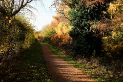 Parque de Tattingstone, Reino Unido, cores das folhas de outono Foto de Stock Royalty Free