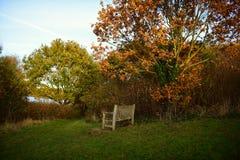 Parque de Tattingstone, Reino Unido, cores das folhas de outono Fotografia de Stock