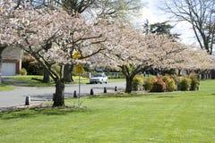 Parque de vecindad hermoso Fotos de archivo libres de regalías