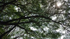 Parque de Viharamahadevi de Sri Lanka Foto de archivo libre de regalías