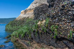 Parque de Whytecliff con marea baja Fotos de archivo libres de regalías