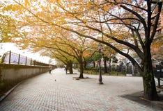 Parque de Yokoamicho no outono imagem de stock