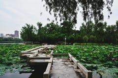 Parque de Ziyang em Wuhan fotos de stock royalty free