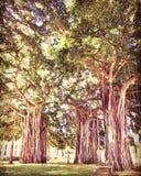 Parque del baniano Imagenes de archivo