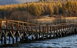Parque del bosque del Estado de Saihanba Imagenes de archivo