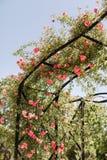 Parque del Buen Retiro i Madrid, Spanien royaltyfri foto