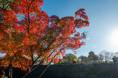Parque del castillo de Osaka Foto de archivo libre de regalías