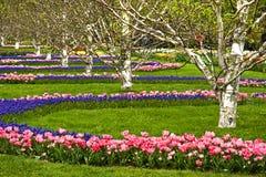 Parque del centro de flores en resorte Foto de archivo