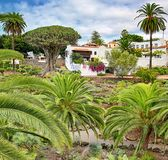 Parque del Drago en Icod de los Vinos - Tenerife Imagen de archivo