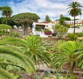 Parque del Drago in Icod de los Vinos - Tenerife stock afbeelding