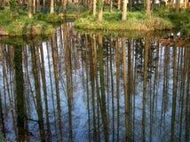 Parque del humedal Imagen de archivo libre de regalías