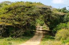 Parque del humedal de ISimangaliso Ruta del jardín, Suráfrica Imagen de archivo