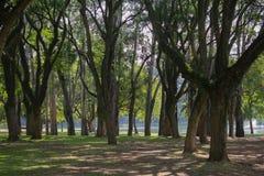 parque del ibirapuera en são Pablo el 25 de abril Fotografía de archivo