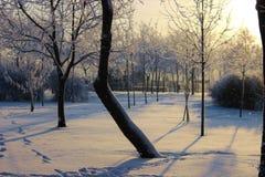 Parque del invierno, árboles del invierno Fotos de archivo libres de regalías