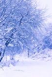 Parque del invierno con el camino nevado Imagenes de archivo