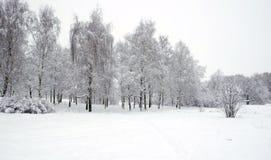 Parque del invierno con los abedules cubiertos con nieve blanca limpia con los árboles de abedul con las ramas nevosas en día nub Imágenes de archivo libres de regalías