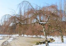 Parque del invierno con los agains de los árboles de abedul el cielo azul Imágenes de archivo libres de regalías