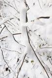 Parque del invierno con nieve Fotos de archivo