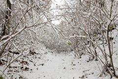 Parque del invierno con nieve Foto de archivo