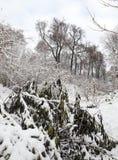 Parque del invierno con nieve Fotos de archivo libres de regalías