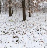 Parque del invierno con nieve Foto de archivo libre de regalías