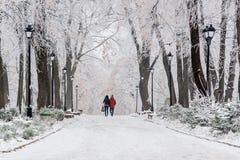 Parque del invierno cubierto con nieve y escarcha Foto de archivo