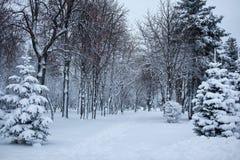 Parque del invierno Día de la nieve Imagenes de archivo