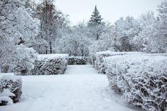 Parque del invierno Día de la nieve Fotografía de archivo
