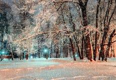 Parque del invierno de la ciudad de la noche bajo nevadas del invierno cubiertas con la helada y la nieve - opinión del invierno  Fotos de archivo libres de regalías