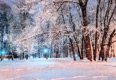 Parque del invierno de la ciudad de la noche durante las nevadas del invierno cubiertas con la helada y la nieve - paisaje del in Fotos de archivo libres de regalías