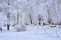 Parque del invierno de la nieve Fotografía de archivo libre de regalías