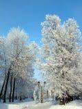 Parque del invierno de la nieve bajo el cielo azul Fotos de archivo libres de regalías