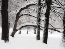 Parque del invierno de la nieve. Moscú. Fotos de archivo libres de regalías