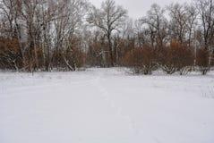 Parque del invierno en Kiev Imagenes de archivo