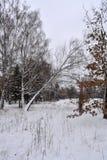 Parque del invierno en Kiev Foto de archivo